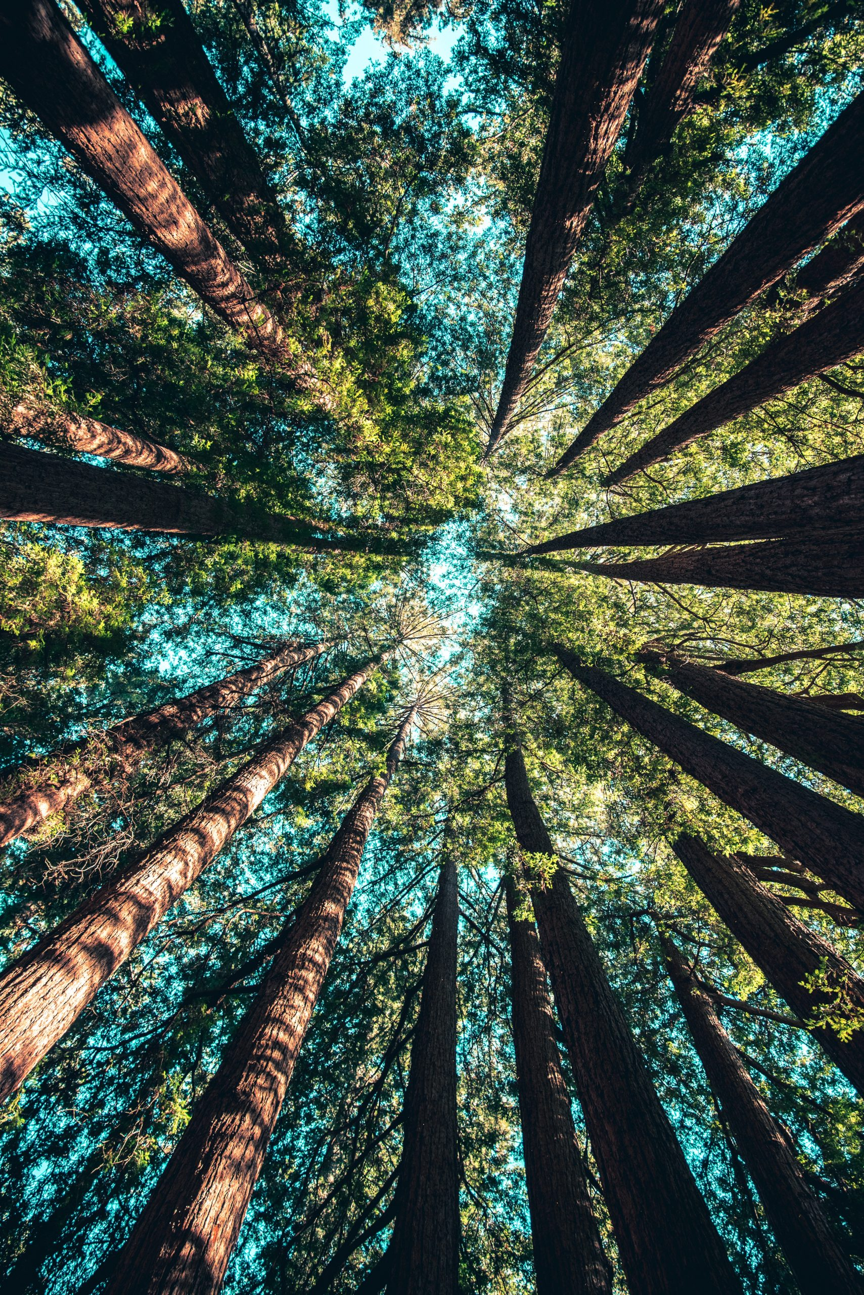 in a forest, looking up